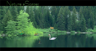 Nature eScapes Screensaver Preview